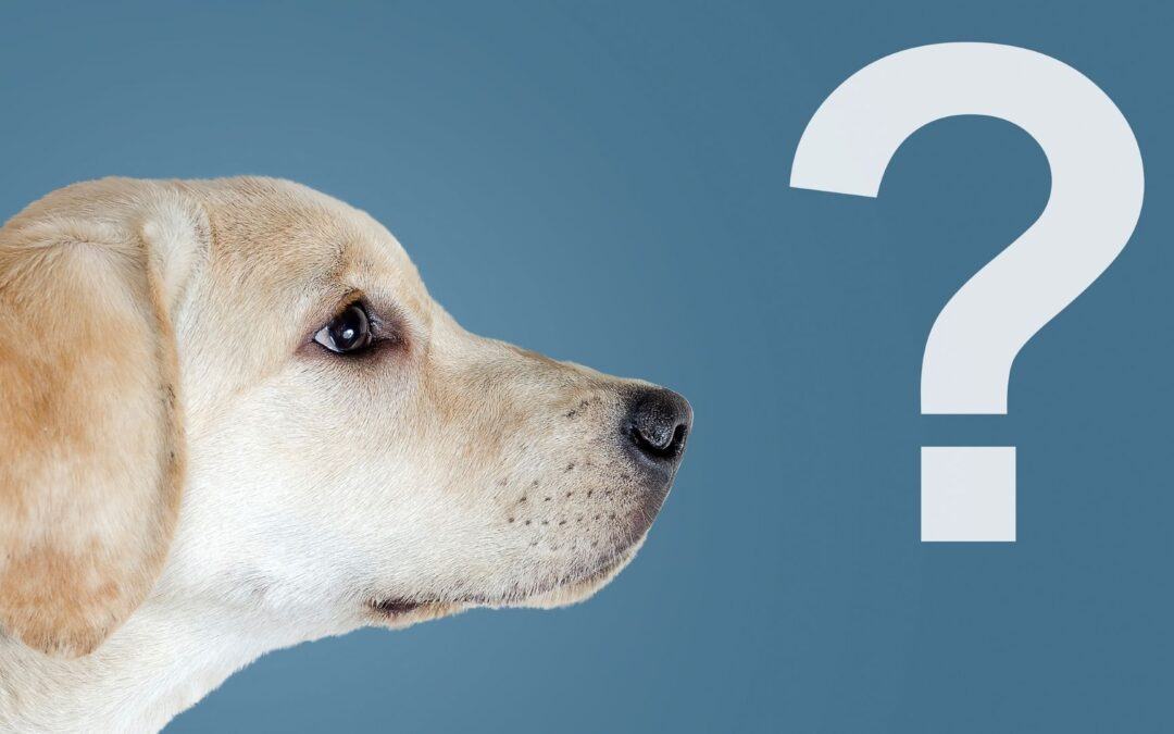 How do I find the right dog trainer for my dog?